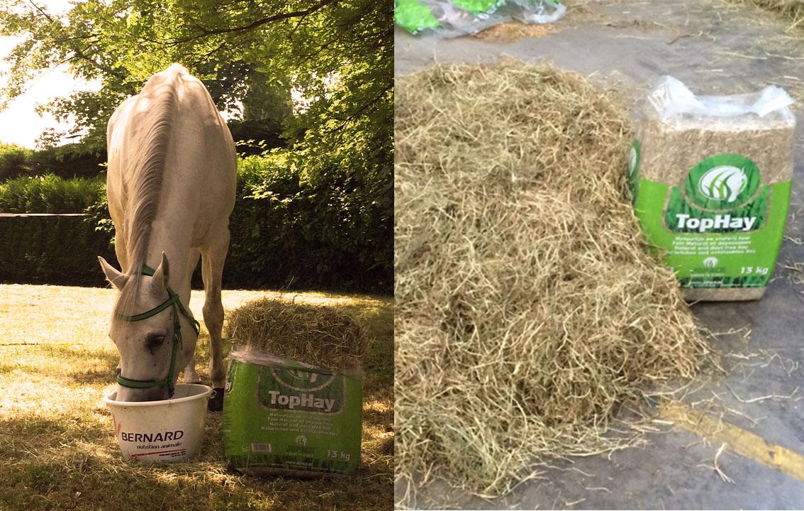 top hay foin de prairie en balles actualit s horse up. Black Bedroom Furniture Sets. Home Design Ideas